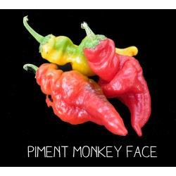 Piment monkey face