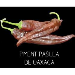 Piment Pasilla de Oaxaca