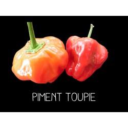 Piment Toupie