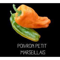 Poivron petit vert marseillais