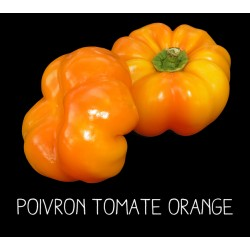 Poivron tomate orange