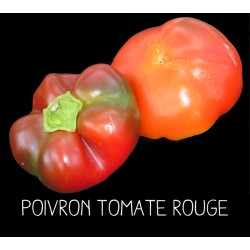 Poivron tomate rouge