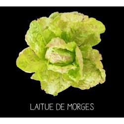 Laitue de Morges