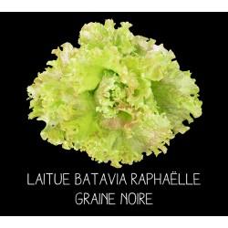 Laitue batavia Raphaëlle...