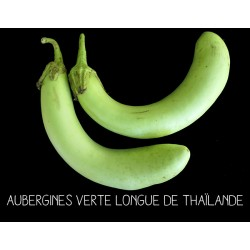 Aubergines verte longue de...