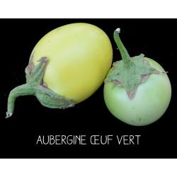 Aubergine œuf vert