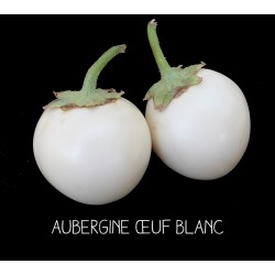 Aubergine œuf blanc