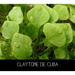 Claytone de Cuba - CL...