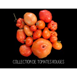 COLLECTION DE TOMATES ROUGES