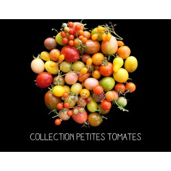 COLLECTION PETITES TOMATES...