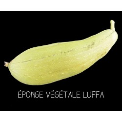 Éponge végétale Luffa -...