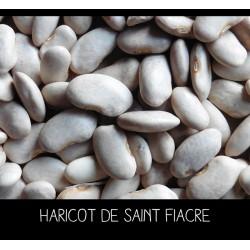 Haricot de Saint Fiacre à...