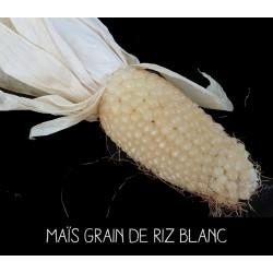 Maïs grain de riz blanc
