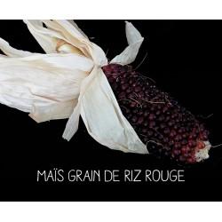 Maïs grain de riz rouge