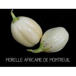 Morelle africaine de Montreuil