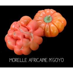 Morelle africaine n'goyo