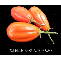 Morelle africaine rouge