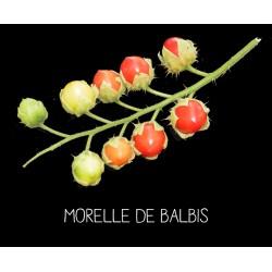 Morelle de Balbis ou tomate...