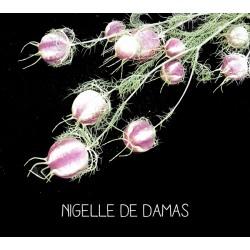 Nigelle de Damas - NIGELL A...
