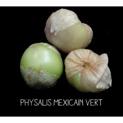 Physalis mexicain vert