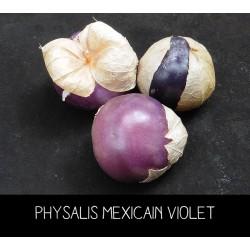 Physalis violet