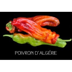Poivron d'Algérie