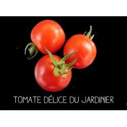Tomate délice du jardinier