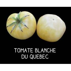 Tomate blanche du Québec