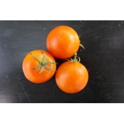 Tomate orange flammée