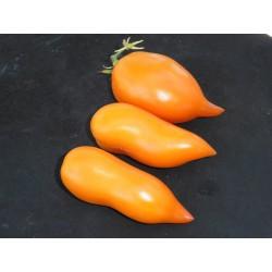 Tomate des Andes orange