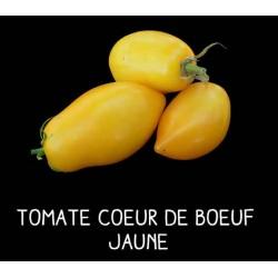 Tomate cœur de bœuf jaune