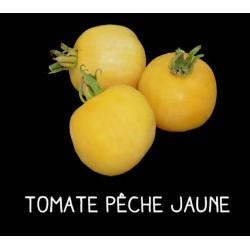 Tomate pêche jaune
