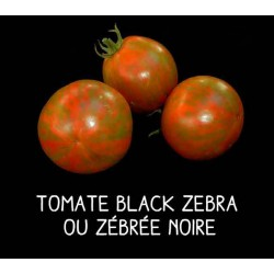 Tomate black zebra ou...