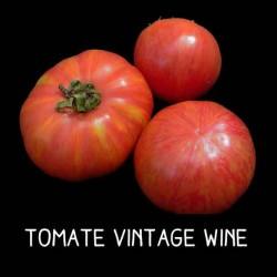 Tomate Vintage wine