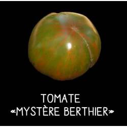 Tomate Mystère Berthier