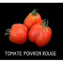 Tomate poivron rouge
