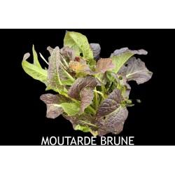Moutarde Brune