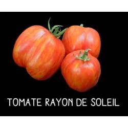 Tomate rayon de soleil