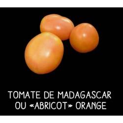 Tomate de Madagascar ou...