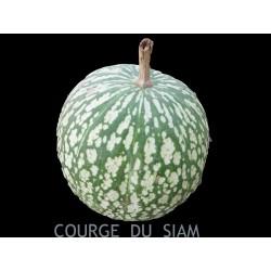 Courge du Siam - CUCURBITA...