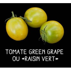 Tomate green grape ou...
