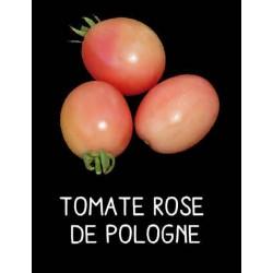 Tomate rose de Pologne