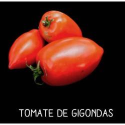 Tomate de Gigondas