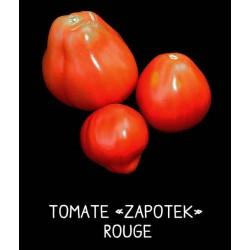 Tomate «zapotek» rouge