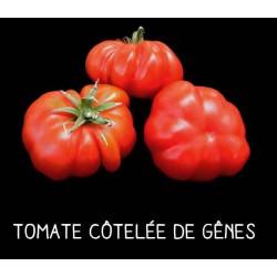Tomate côtelée de Gênes rouge