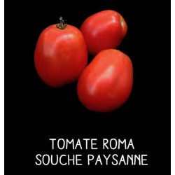 Tomate Roma souche paysanne