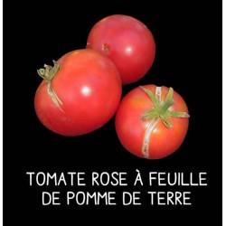 Tomate rose à feuille de...