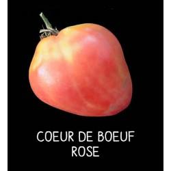 Tomate cœur de bœuf rose