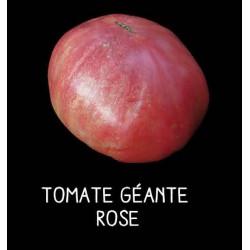 Tomate géante rose