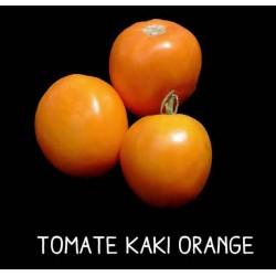 Tomate kaki orange